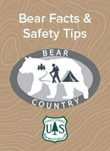 Bear Safety in the Upstate