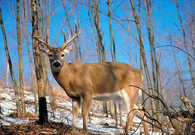 Upstate Deer Hunting
